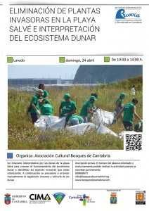 VOLUNTARIADO AMBIENTAL PLAYA SALVÉ @ Playa Salvé